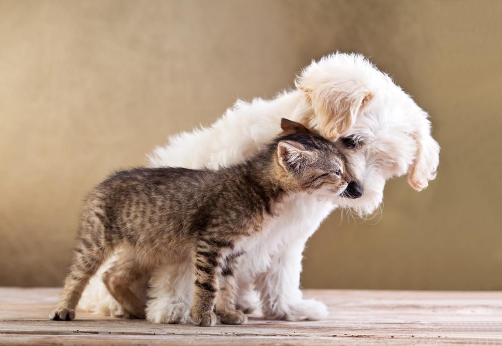 cat-dog-photo